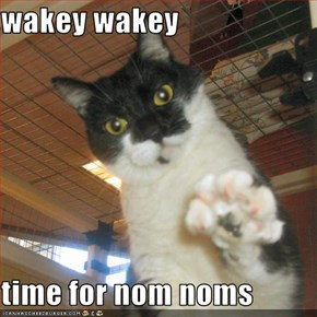 wakey wakey  time for nom noms