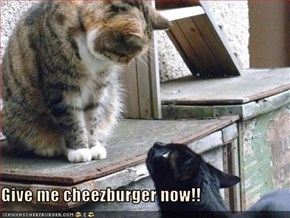Give me cheezburger now!!