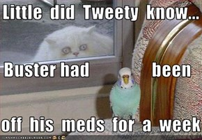 Little  did  Tweety  know...  Buster had                 been    off  his  meds  for  a  week