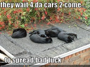 they wait 4 da cars 2 come...  ...to spread bad luck