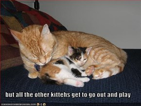 but all the other kittehs get to go out and play
