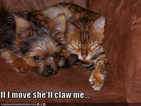 If I move she'll claw me...