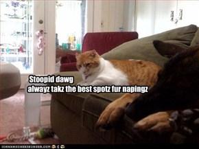 Stoopid dawg  alwayz takz the best spotz fur napingz