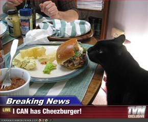 Breaking News - I CAN has Cheezburger!