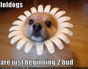 loldogs  are just beginning 2 bud