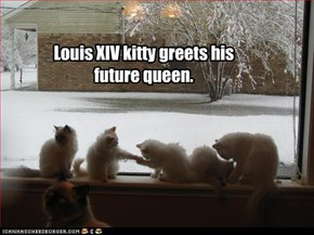 Louis XIV kitty greets his future queen.