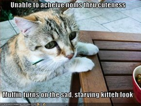 Unable to acheive noms thru cuteness  Muffin turns on the sad, starving kitteh look