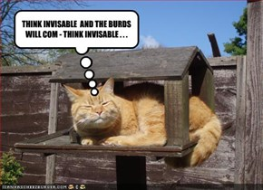 THINK INVISABLE  AND THE BURDS WILL COM - THINK INVISABLE . . .