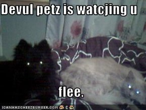 Devul petz is watcjing u  flee.