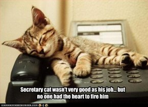 Secretary cat wasn't very good as his job... but no one had the heart to fire him