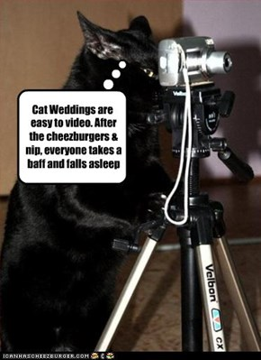 Cat Weddings are