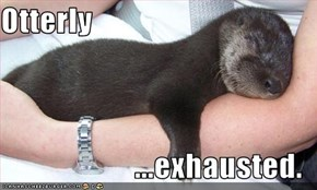 Otterly  ...exhausted.