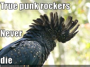 True punk rockers Never die