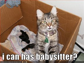 i can has babysitter?