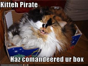 Kitteh Pirate  Haz comandeered ur box