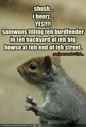 shush... i heerz... YES!!!! sumwuns filling teh burdfeeder in teh backyard of teh big howse at teh end of teh street.