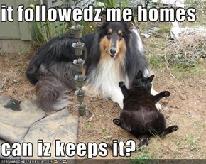 it followedz me homes   can iz keeps it?
