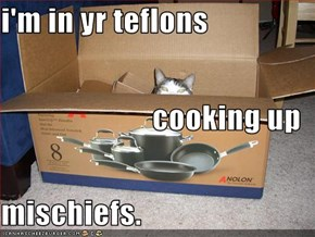 i'm in yr teflons cooking up mischiefs.