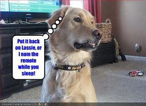 Put it back on Lassie, or I nom the remote while you sleep!