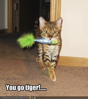 You go tiger!.....