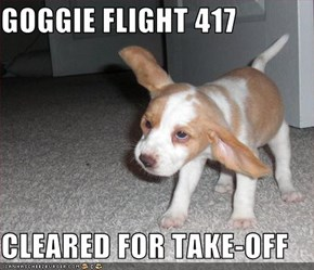 GOGGIE FLIGHT 417  CLEARED FOR TAKE-OFF