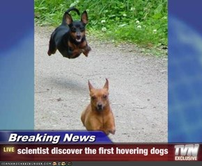 Breaking News - scientist discover the first hovering dogs