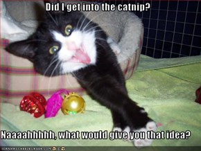 Did I get into the catnip?  Naaaahhhhh, what would give you that idea?