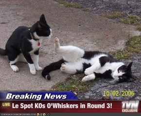 Breaking News - Le Spot KOs O'Whiskers in Round 3!
