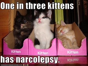 One in three kittens  has narcolepsy.