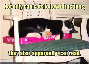 Not only can cats follow directions,
