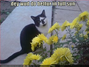 dey wud do bettur in full sun