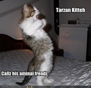 Tarzan Kitteh
