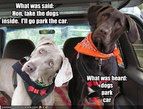 What was said:   Hon, take the dogs inside.  I'll go park the car.