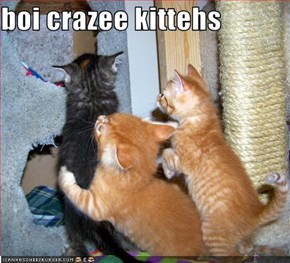 boi crazee kittehs