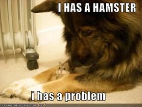 I HAS A HAMSTER  i has a problem