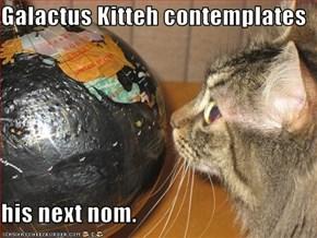 Galactus Kitteh contemplates  his next nom.
