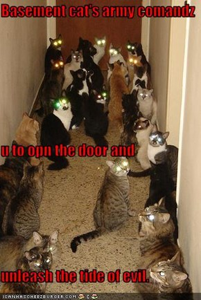 Basement cat's army comandz u to opn the door and unleash the tide of evil.
