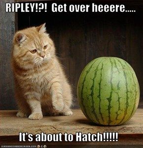RIPLEY!?!  Get over heeere.....  It's about to Hatch!!!!!