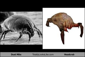 Dust Mite Totally Looks Like Headcrab
