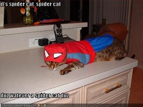 it's spider cat, spider cat  duz watever a spider cat duz