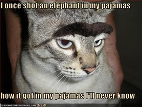 I once shot an elephant in my pajamas  how it got in my pajamas I'll never know