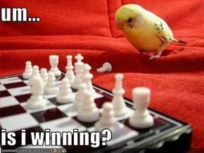 um...  is i winning?