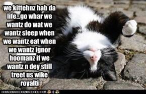 we kittehnz hab da life...go whar we wantz do wat we wantz sleep when we wantz eat when we wantz ignor hoomanz if we wantz n dey still treet us wike royalti