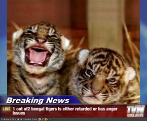 Breaking News - 1 out of2 bengal tigers is either retarded or has anger issues
