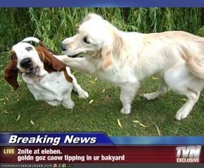 Breaking News - 2nite at eleben.   goldn goz caow tipping in ur bakyard