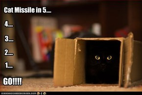 Cat Missile in 5....