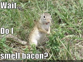 Wait... Do I  smell bacon?