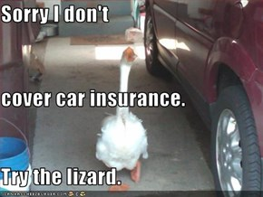 Sorry I don't  cover car insurance. Try the lizard.