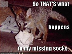 So THAT'S what happens to my missing socks.