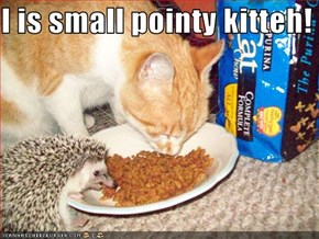 I is small pointy kitteh!